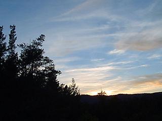 Sunsetovertrees